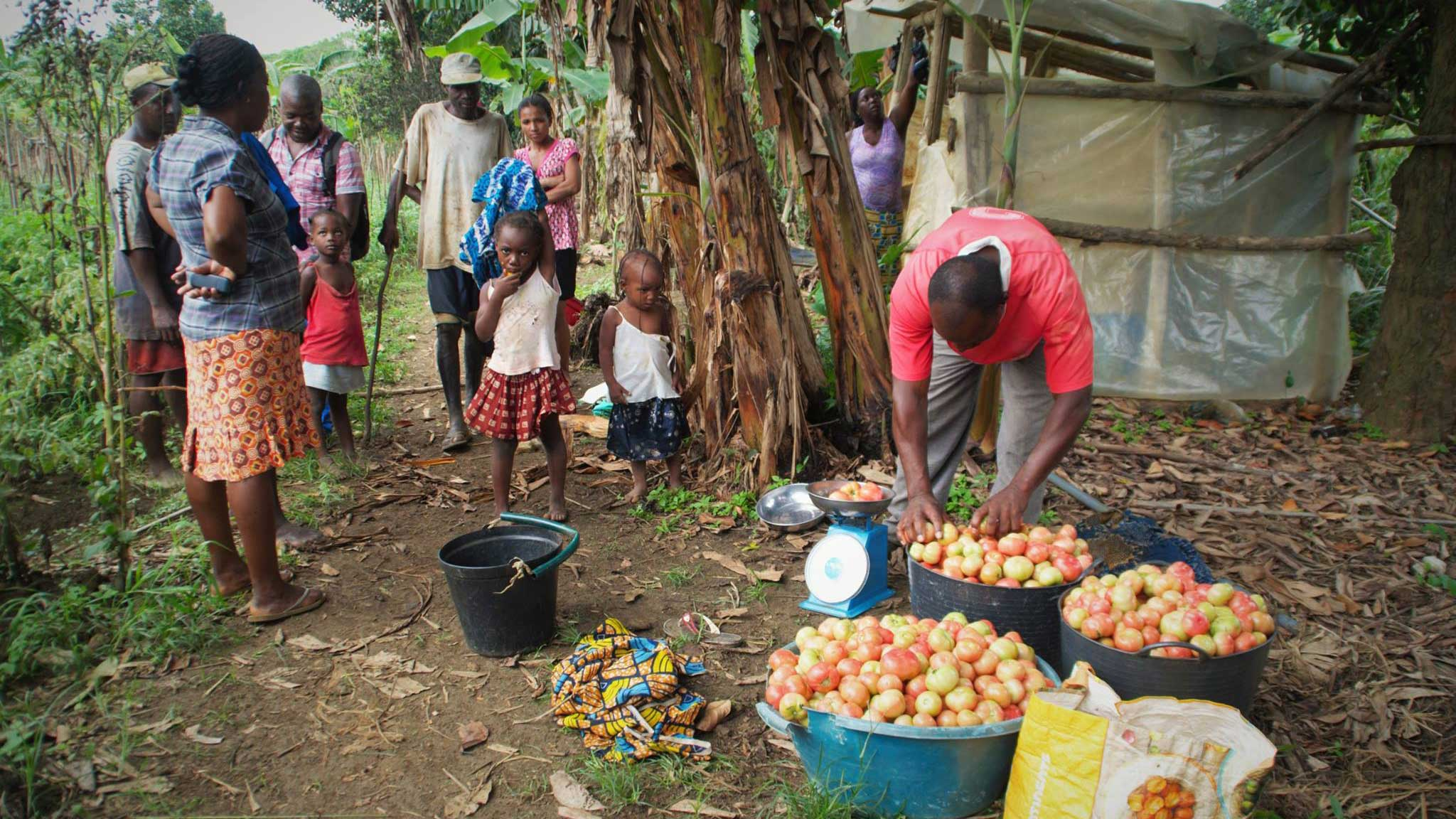 Final evaluation of the Decentralised Program for Food Security